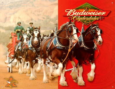 The Budweiser horses are back this year for Superbowl XLV